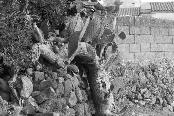 2011-08-07 - Scorci di Narbolia zona chiesa0057 (Custom)