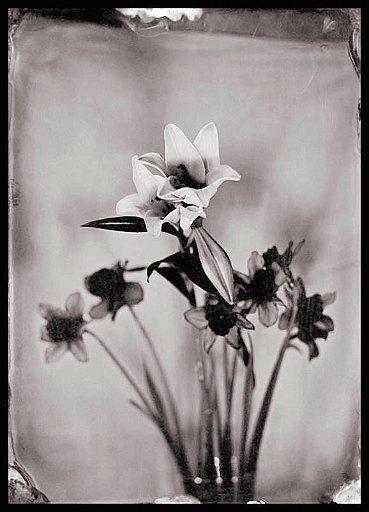 fiori1_tyntipe